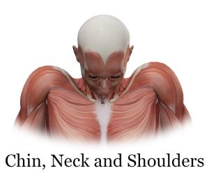 chin, neck and shoulders