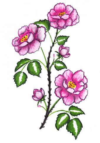 https://cf.ltkcdn.net/tattoos/images/slide/156652-579x829r1-Pink-roses.jpg