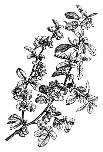 https://cf.ltkcdn.net/tattoos/images/slide/156653-570x842r1-Black-and-white-flowers.jpg