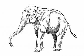 https://cf.ltkcdn.net/tattoos/images/slide/180032-800x533-elephant-drawing-tattoo.jpg