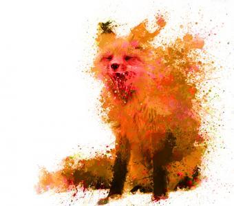 splash fox