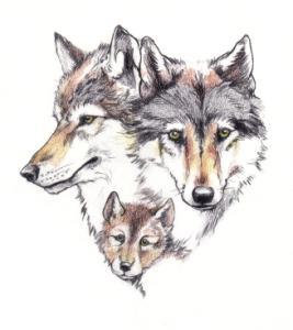 Wolfportrait.jpg