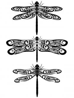 Patterned Wings on Dragonfly