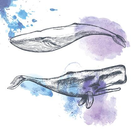 Hand drawn whales