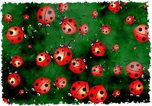 Lots of ladybugs