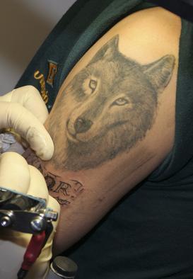 lifelike wolf