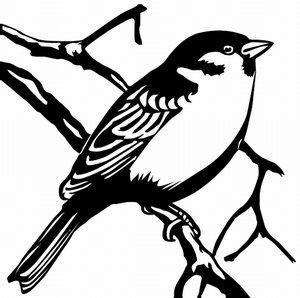 Sparrow tat art