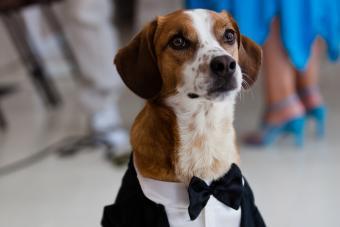 https://cf.ltkcdn.net/teens/images/slide/242881-850x566-dog-wearing-tux.jpg