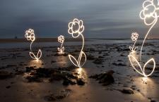 Light flowers on beach