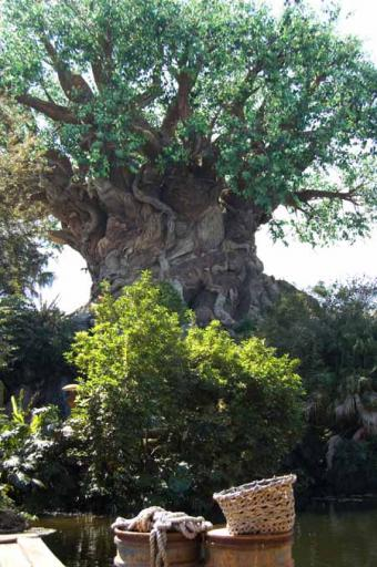 Images of the Tree of Life