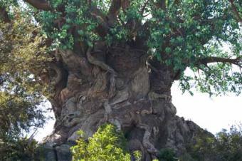 https://cf.ltkcdn.net/themeparks/images/slide/122804-500x332-close_tree_life.jpg