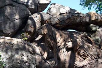 https://cf.ltkcdn.net/themeparks/images/slide/122808-500x332-wolves_tree_life.jpg
