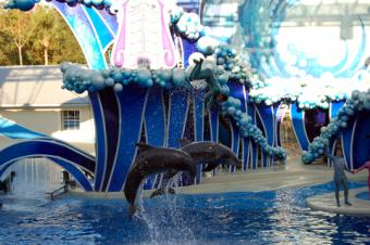 Dolphins performing at SeaWorld Orlando