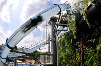 Scorpian's Tail - Photo courtesy of Noah's Ark