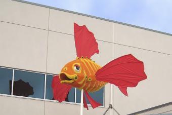 What to See at Sea Life Aquarium at the LEGOLAND California Resort