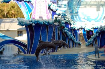 Dolphins performing at SeaWorld Orlando