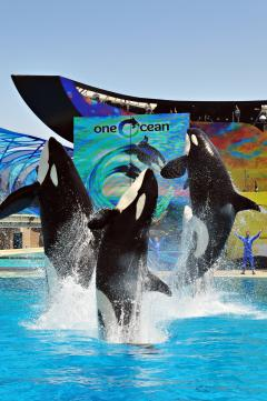 SeaWorld San Diego's One Ocean® show