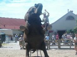 Indianapolis_Zoo_Elephant.JPG