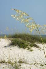 Orange Beach Vacations