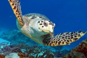 Diving in Cozumel is the best on the planet