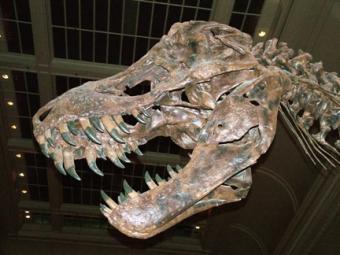 Visiting the Las Vegas Natural History Museum