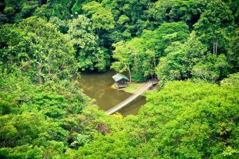 Visiting Gunung Mulu National Park