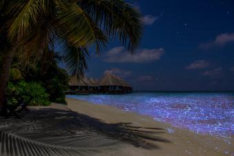 Illumination of plankton at Maldives