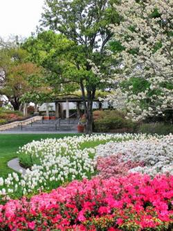 The Dallas Arboretum