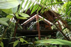 The Canopy Rainforest Tree Houses and Wildlife Sanctuary Treehouse