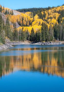 Golden aspens at Mesa Lakes, Colorado