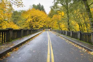 Autumn trees along Historic Columbia Highway Bridge