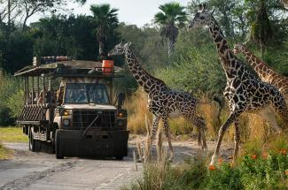 Kilimanjaro Safari ride at Walt Disney World