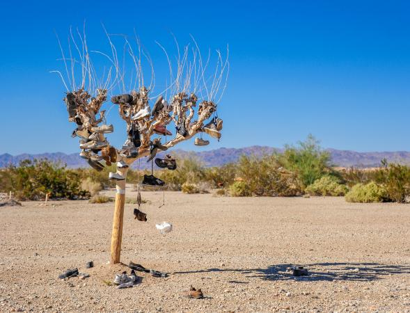Shoe tree in Slab City