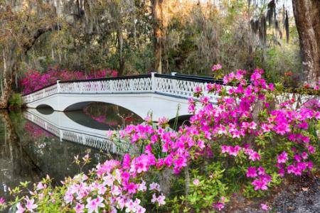 Magnolia Plantation in Charleston, SC