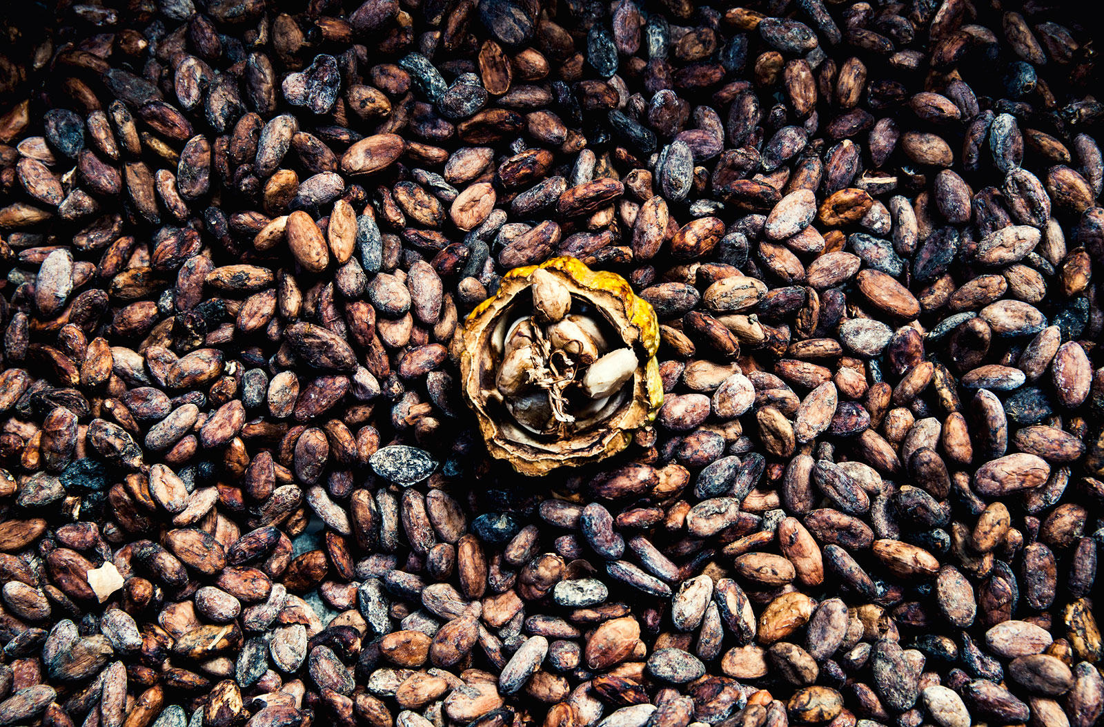 Raw Cacao Side Effects And Benefits Lovetoknow