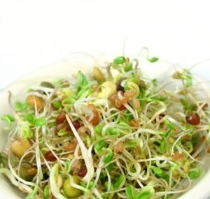 Germsprouts300.jpg