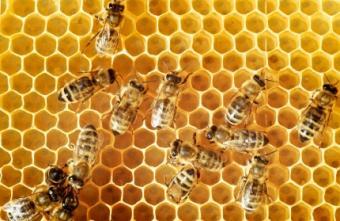 Local Raw Honey Benefits & Perks of Combinations