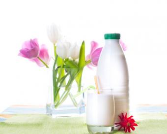 probiotic dairy foods