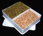 Sprouting Tray