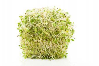 https://cf.ltkcdn.net/vegetarian/images/slide/124973-849x565-sproutnutrition.jpg