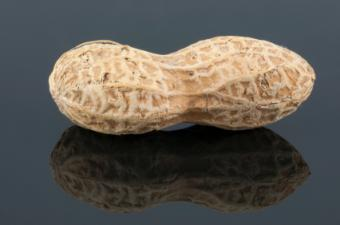 Is a Peanut a Legume & Are They Good for Vegetarians?
