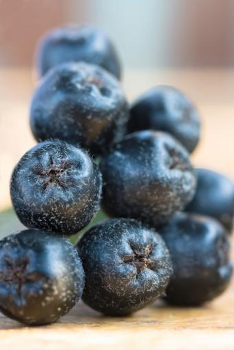 Guide to Aronia Berry Taste, Benefits & Cooking Uses