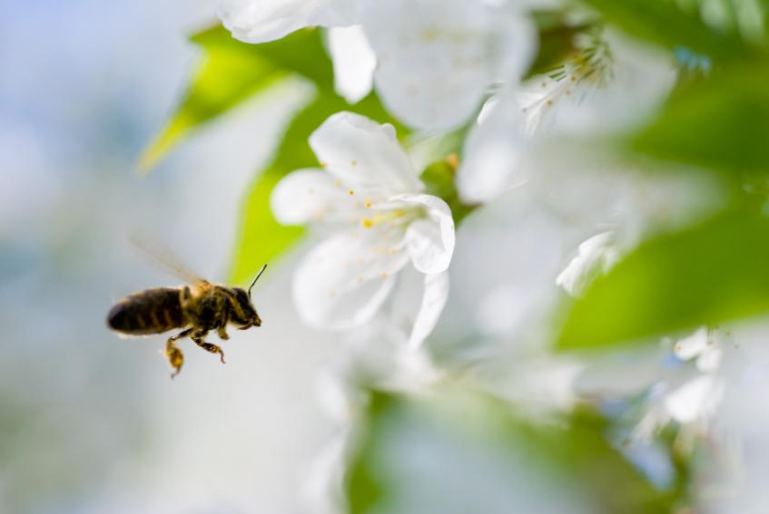 https://cf.ltkcdn.net/vitamins/images/slide/124170-847x567-00bee_flower.jpg