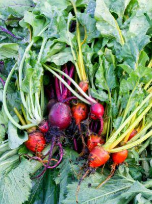Beet greens are rich in iron.