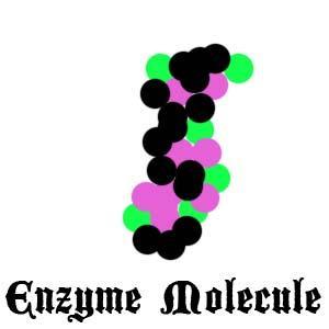Enzyme Molecule