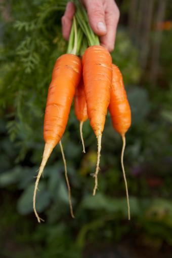 https://cf.ltkcdn.net/vitamins/images/slide/124120-566x848-Carrots0109.jpg