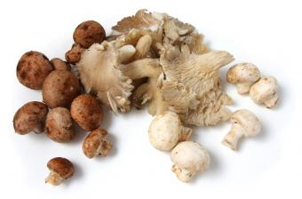 https://cf.ltkcdn.net/vitamins/images/slide/124306-850x559-Mushrooms.jpg