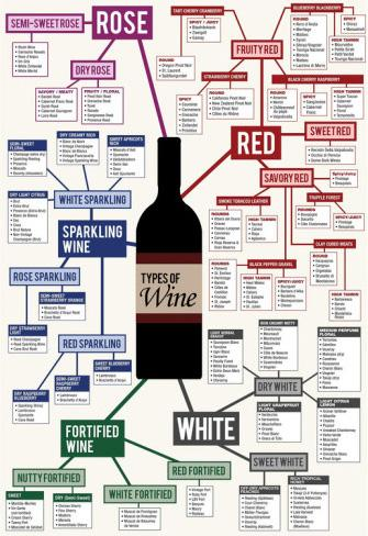 Types of Wine useful bait infographic