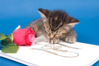 Free Cute Guestbooks