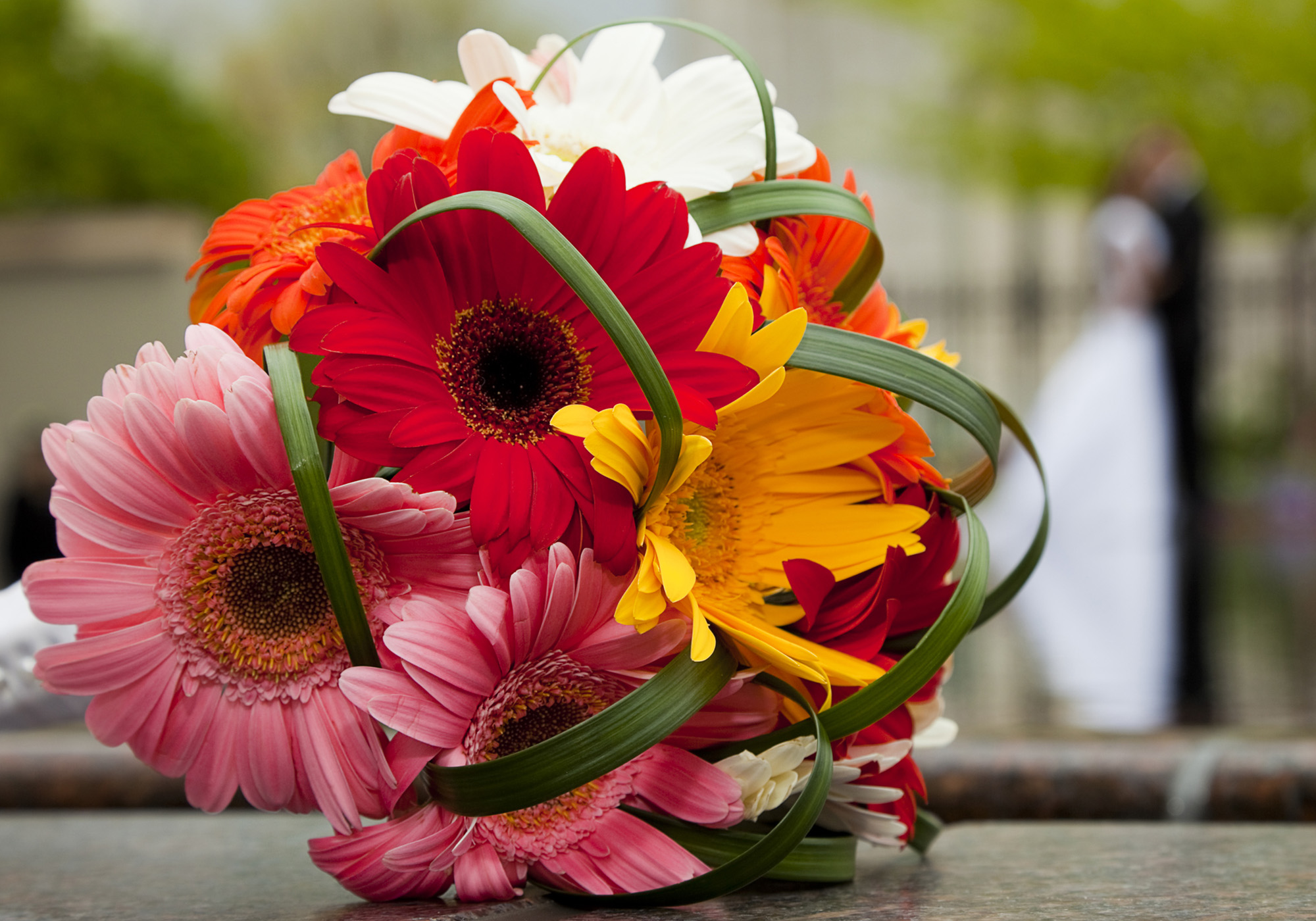 1_gerber_daisy_bouquet_red_pink.jpg